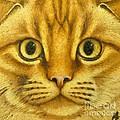 The French Orange Cat by Dragica  Micki Fortuna