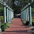 The Garden Walk by Grace Grogan