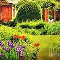 The Gardens by Darren Fisher