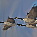 The Geese by Ernie Echols
