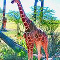 The Gentle Giraffe by Elinor Mavor