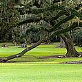 The Giving Tree by Scott Pellegrin