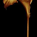 The Golden Calla Lilly by Georgiana Romanovna