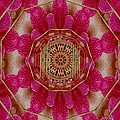 The Golden Orchid Mandala by Pepita Selles