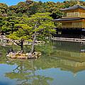 The Golden Pavilion by Jonah Anderson