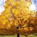 The Golden Tree by Lj Lambert