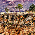 The Grand Canyon Iv by Tom Prendergast
