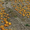 The Great Pumpkin Patch Trail by LeeAnn McLaneGoetz McLaneGoetzStudioLLCcom