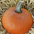 The Great Pumpkin by Sandi OReilly