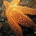 The Great Starfish by Paul Ward
