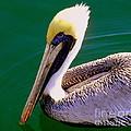 The Happy Pelican by Karen Wiles
