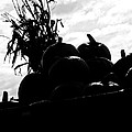 The Harvest by Jessica Brawley