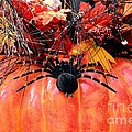 The Harvest Spider by Maria Urso