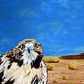 The Hawk by Maris Sherwood