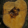 The Heart Of A Tree by Susan Herber