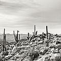 The High Desert  by Saija  Lehtonen