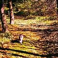 The Hiker by Renate Nadi Wesley