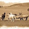 The Horse Herd by Steve McKinzie