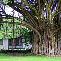 The House Beside The Banyan Tree by Mary Deal