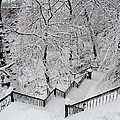The Hundred Steps In The Snow by Bill Cannon