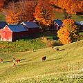 The Jenne Farm by Butch Lombardi