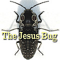 The Jesus Bug by Terry Lynch