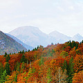 The Julian Alps In Autumn At Lake Bohinj by Greg Matchick