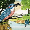 The Kingfisher by D A Forrest