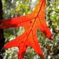 The Last Leaf by Warren Thompson