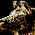 The Legendary Llama  by Steve Taylor