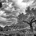 The Light On The Cottonwood Bw by Mitch Johanson
