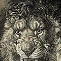 The Lion, King Of Beasts.  From El by Ken Welsh