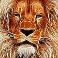 The Lion Sleeps Tonight by Steve K