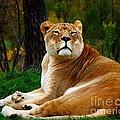 The Lioness by Davandra Cribbie