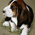 The Little Basset by Mary Sparrow