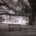 The Lonely Bench by Heinz G Mielke