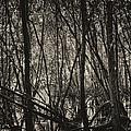 The Mangrove by Armando Perez