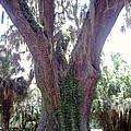 The Mighty Oak by Cheryl Matthew