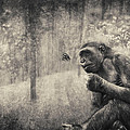 The Monkey And Butterfly by Diane Dugas