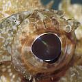 The Mosaic Eye Of The Venemous by Jason Edwards