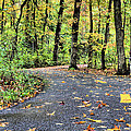 The Mount Vernon Trail. by JC Findley