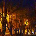 The Night Lights by Steve Taylor