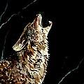 The Night Of The Wolf by Amalia Jonas