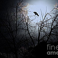 The Night The Raven Appeared In My Dream . 7d12631 by Wingsdomain Art and Photography