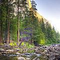 The Now Creek by Sean Selfridge