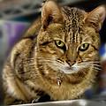 The Obligatory Cute Cat Photo by Robert Ullmann