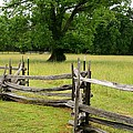 The Old Fence by Valia Bradshaw