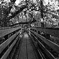 The Old Hillsborough Bridge by David Lee Thompson