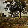 The Old Home Place by Debbie Portwood