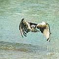 The Osprey Glare by Deborah Benoit
